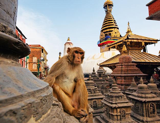 Séjour yoga et méditation, immersion au Népal - Nepal temple