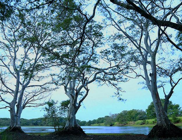 Athreya Ayurveda Ashram - Lac