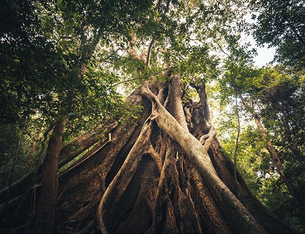 Circuit yoga et ayurvéda au Sri-Lanka - Site de ritigala