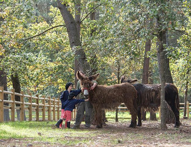 Center Parcs Domaine du Bois aux Daims - Domaine du bois aux daims